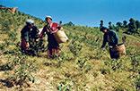 Myanmar Hill Tribe Trek (14 Days - 13 Nights)